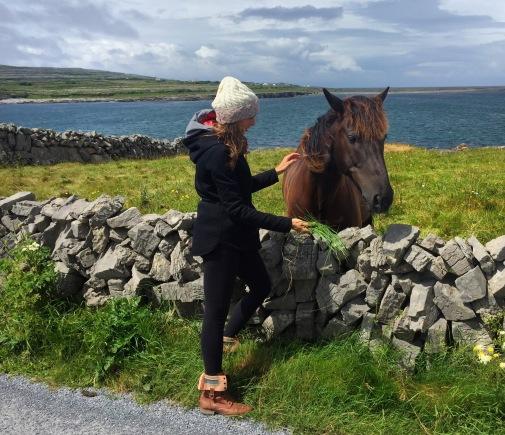 Feeding horses along the road
